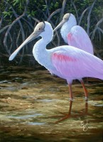 Color Study - Spoonbills