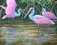 Spoonbills and Mangroves