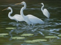 Water Study - Three Egrets