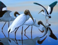 Wood Stork Dreams